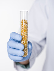 Hispanic scientist holding test tube containing corn