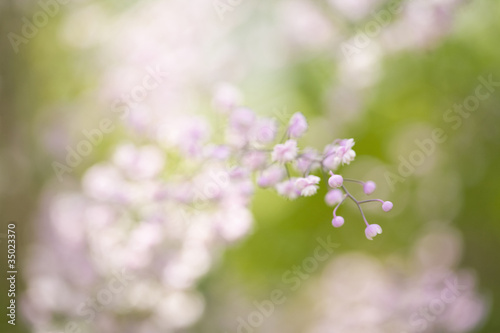 Pink blossoms on flower stem