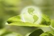 Glass globe resting on green leaf