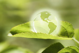 Glass globe resting on green leaf