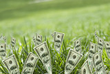100 dollar bills growing in grass