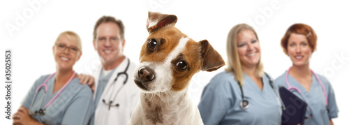 Jack Russell Terrier and Veterinarians Behind - 35025153