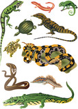 collection of reptiles and amphibians poster