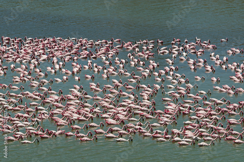 Foto op Aluminium Flamingo looking for a food