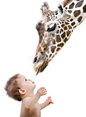 Giraffe und Mensch