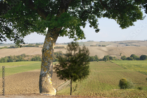 Italian rural view is field and the trees
