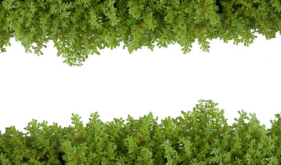 Fern green isolated white background.