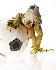 Iguana in football concept