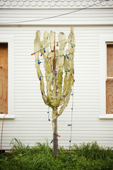 Cactus draped in Christmas lights