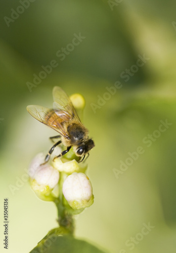 Bee landing on flower
