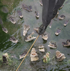 Caucasian businessman walking tightrope over alligators