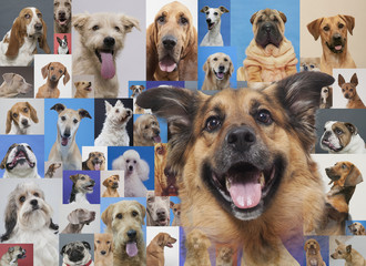 Montage of various dogs