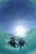 Couple scuba diving