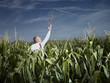 Caucasian businessman in corn field reaching for red telephone