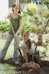 Caucasian girls planting sapling tree in ground