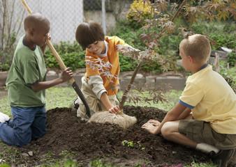 Boys planting sapling tree in ground