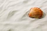 Fototapety Muschel liegt im Sand am Strand