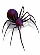 black widow spider isolated on white