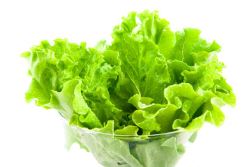 Fresh green leaf lettuce crisp on a white background