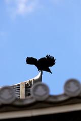 Crow of Kyoto