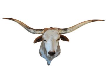 Head of Longhorn