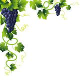 Fototapety blue grapes corner