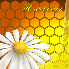 Honey background with daisies