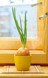 green onion in pot on window sill poster