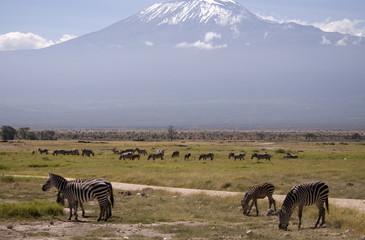 African savannah and Kilimanjaro