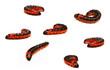 Seven big red catterpillars of Goat Moth (Cossus cossus)