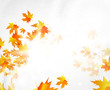 Autumn vector abstract background
