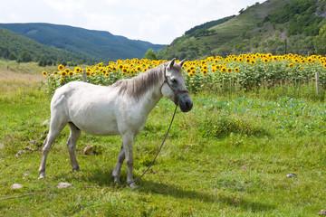white horse in green grassland