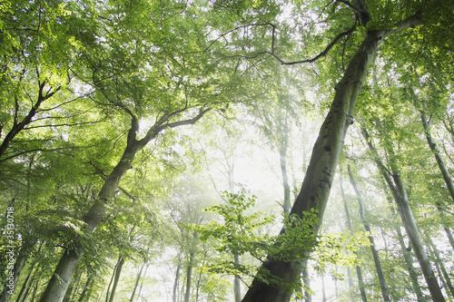 korona-zielonych-drzew