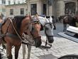 Pferdekutsche Fiaker Wien