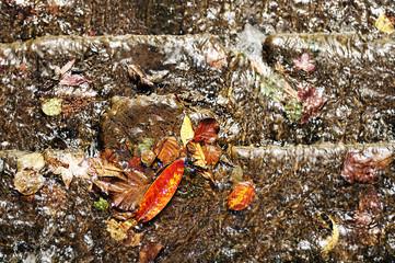 draining leaves