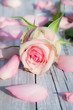 Rose mit Rosenblättern