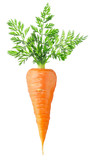 Carrot with leaves isolated on white