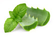Aloe with mint