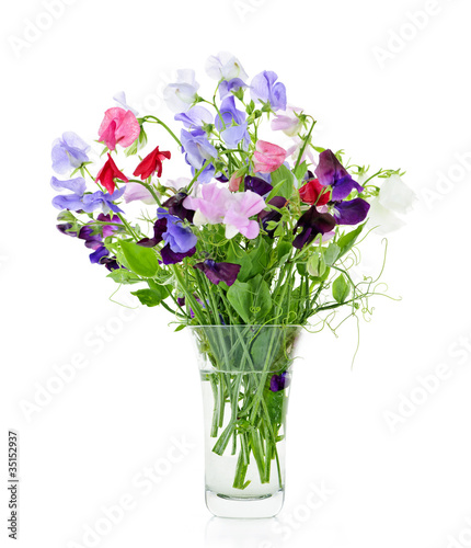 Bouquet of sweet pea flowers in vase