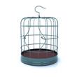 broken bird cage
