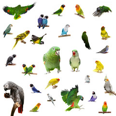 Set parrots and parakeets isolated on white