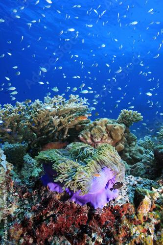 Fototapeten,korallen,unterwasser,korallen,korallenstrand