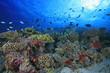Fototapeten,unterwasser,korallen,korallen,korallenriff