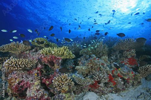 Fototapeten,unterwasser,korallen,korallen,korallenstrand