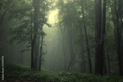 Foto op Canvas Bos in mist Green forest after rain