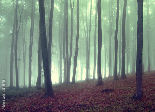 Foto op Canvas Bos in mist fog in a beautiful forest