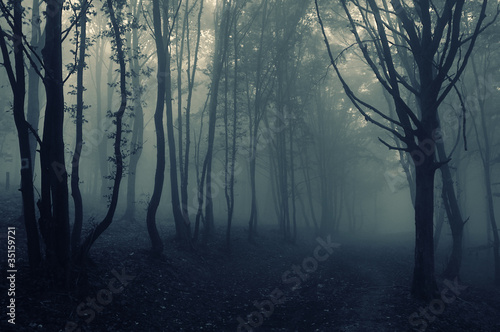 forest landscape with fog
