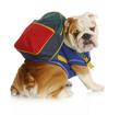 dog obedience school