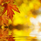 Fototapety Fall. Autumn Background