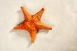 beach white sand starfish summer vacation symbol